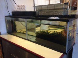おまかせ1500円の海鮮丼