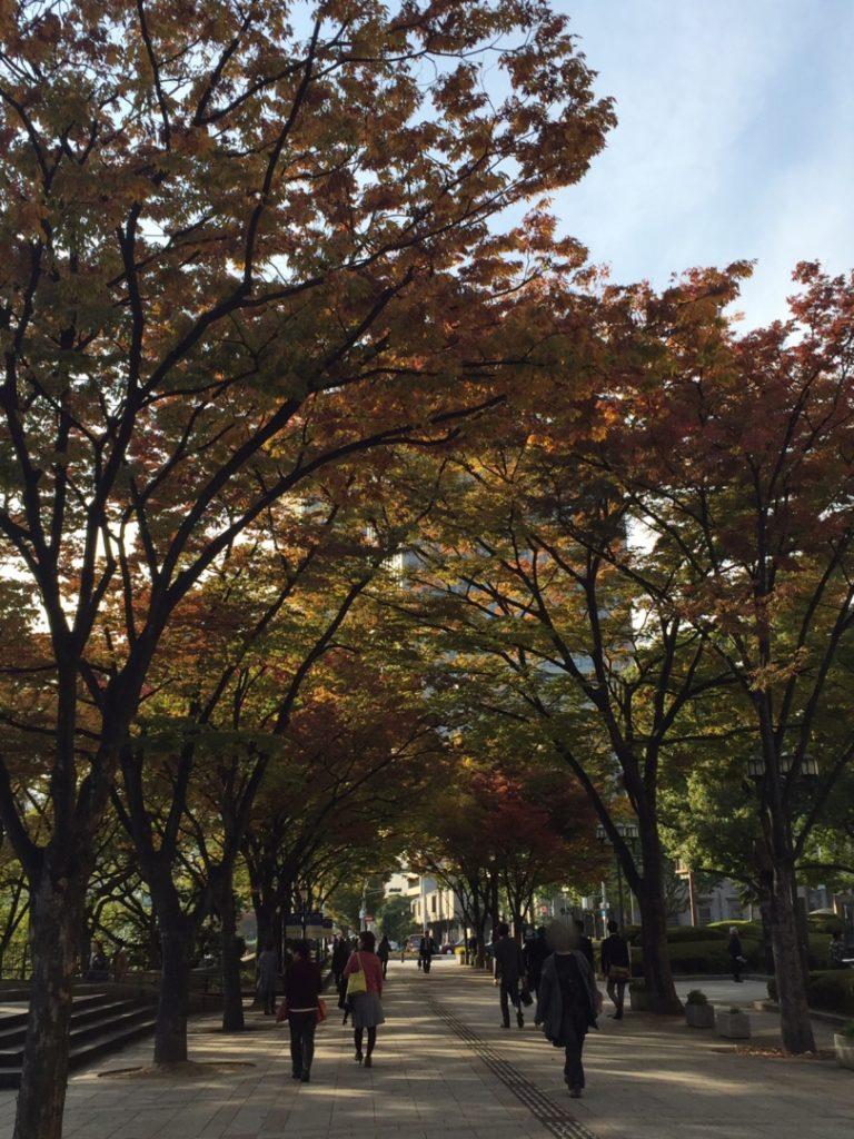 大阪市役所近くの紅葉