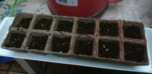 5月4日枝豆を植えたところ