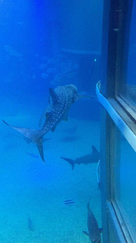 次女の水族館デビューで海遊館へ行ってきました