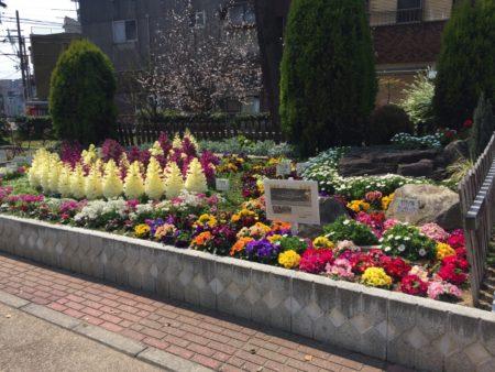 真田山公園の花壇に春の訪れを感じる