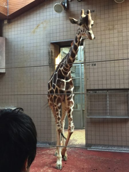 夕方からぶらりと天王寺動物園へ行ってきました