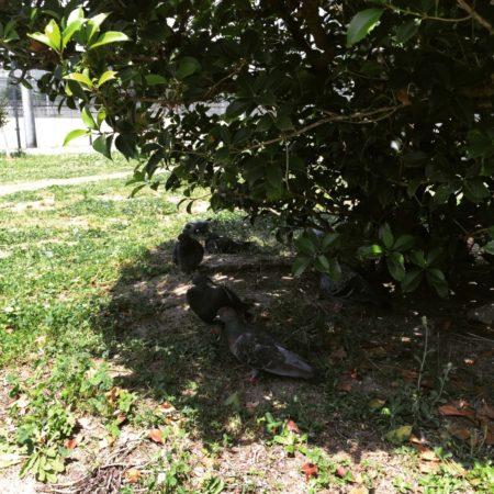 真田山公園の昼下がりの花壇の様子など